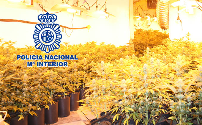 marihuana-policia-naciona