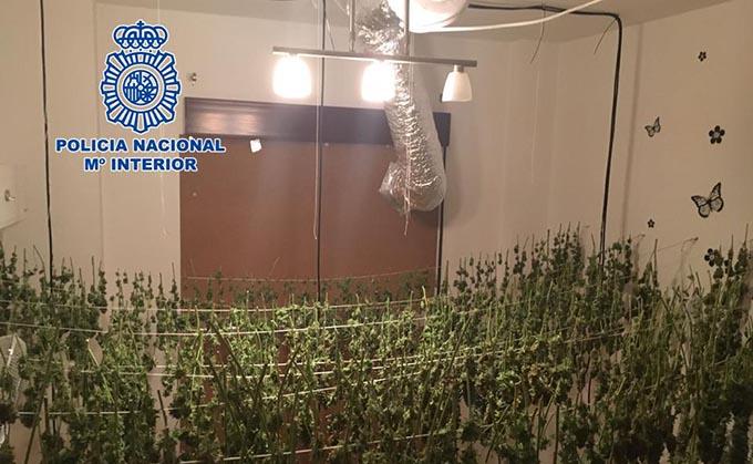 Plantacion Cannabis Motril