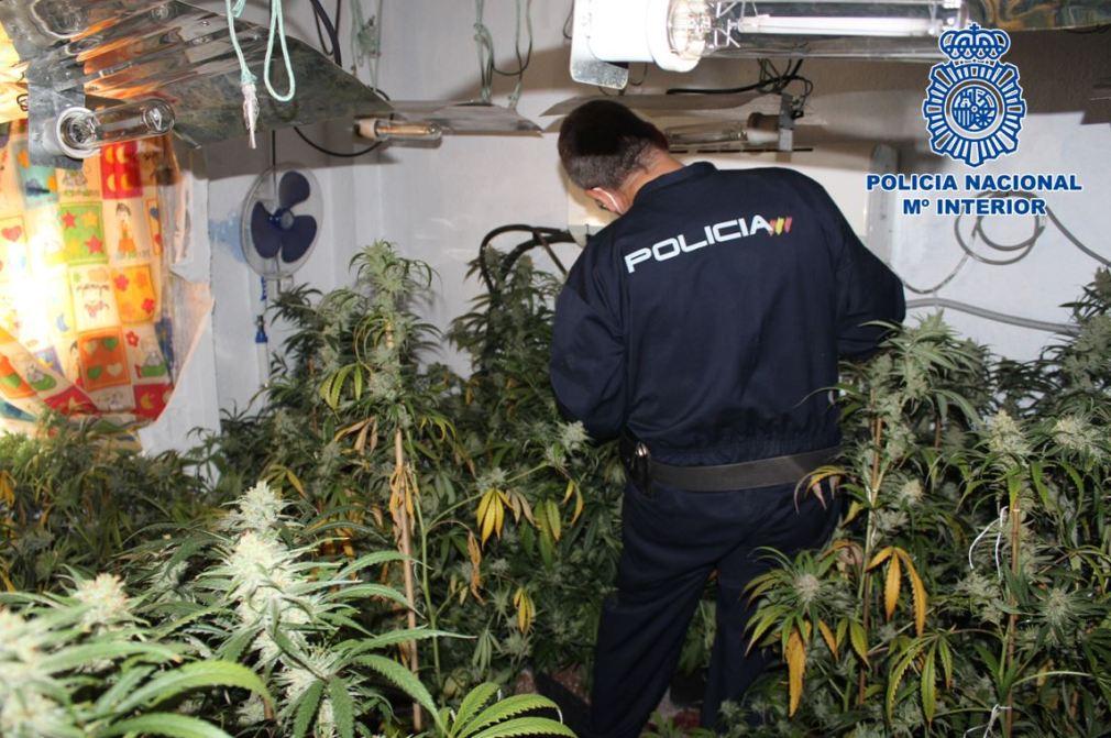 Plantacion_indoor_04