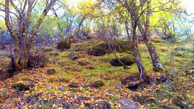 Bosque Encantado del Camarate Granadino Errante
