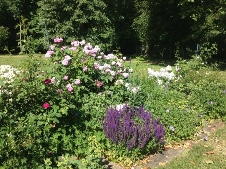 Dans le parc de Grand Bouy, la plate-bande de rosiers anciens