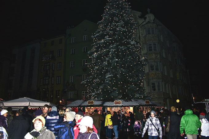 toit_arbre