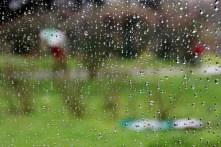 A travers la vitre-Bernard Auzanneau