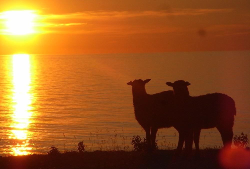 Homélie par le pasteur Marc Balz : Le bon berger