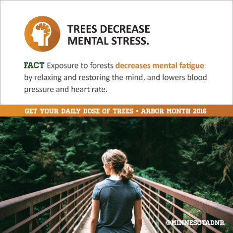 Trees decrease mental stress