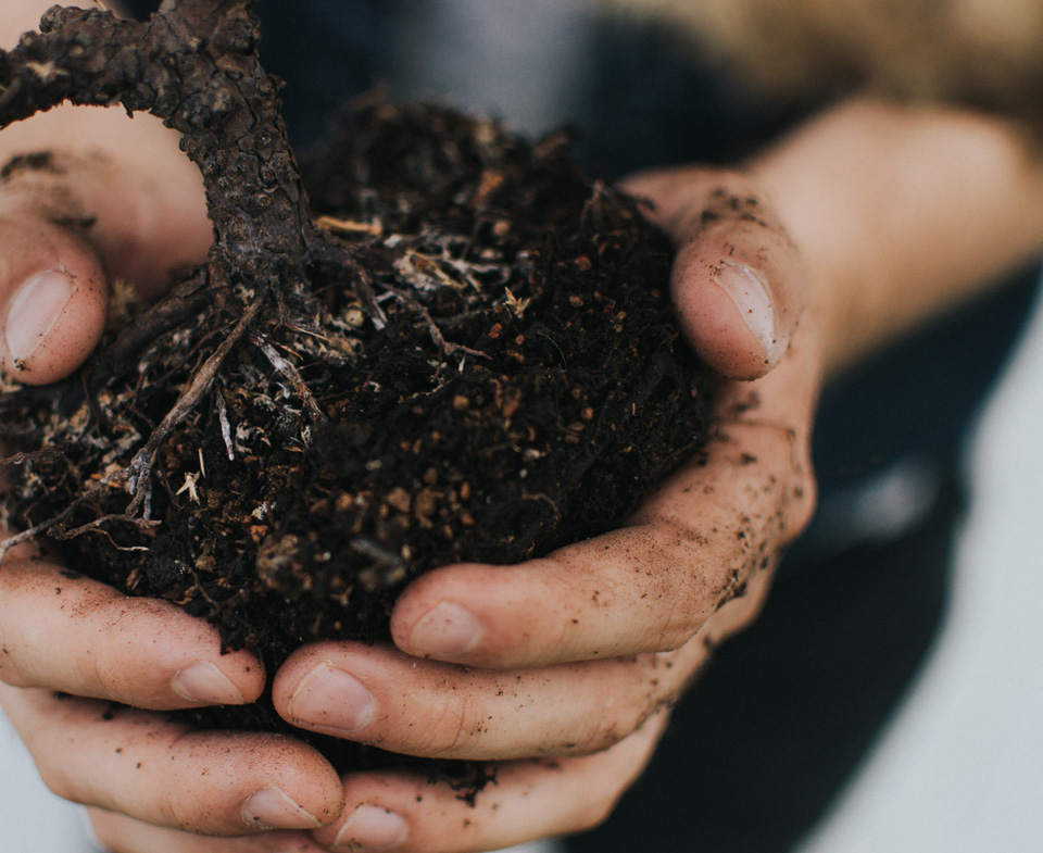hands holding root bundle with healthy black soil