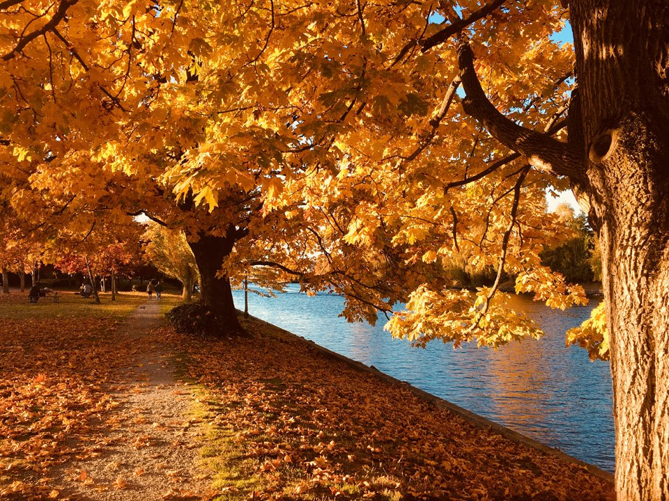 park oak trees in autumn near urban river