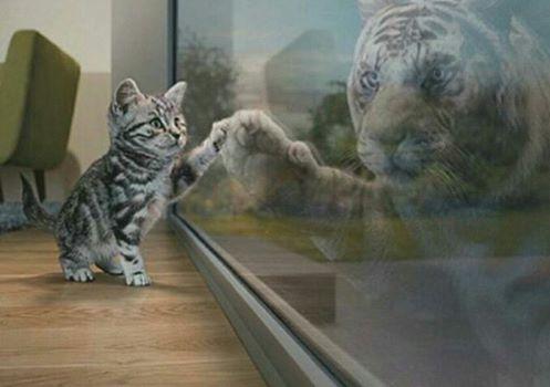 Mira en el espejo, qué es lo que ves?
