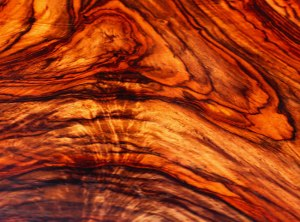 Cocobolo_large_web