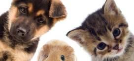 pets and grandchildren