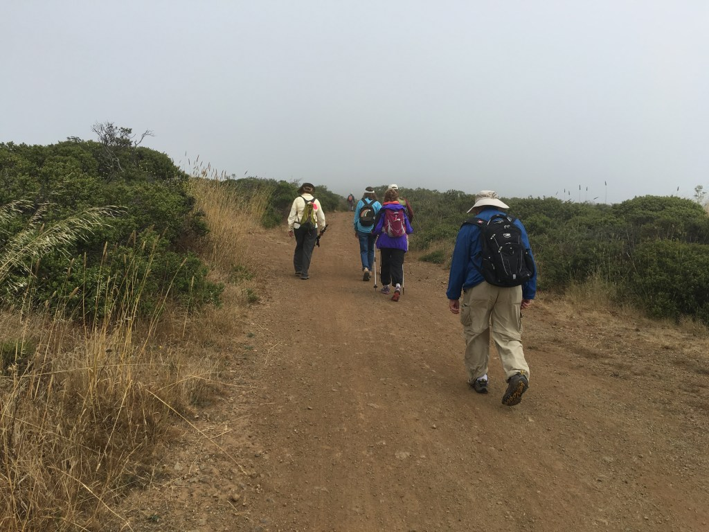 Members of the local chapter of American Pilgrims on the Camino, Muir Woods National Monument. Photo credit: Brien Crothers
