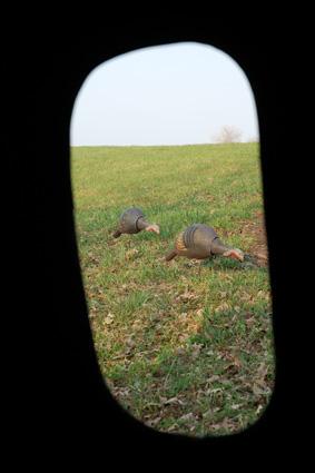 Turkey hunting blind setup
