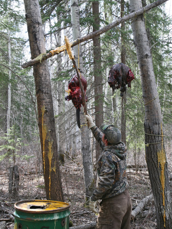 Bear Hunting Mistakes