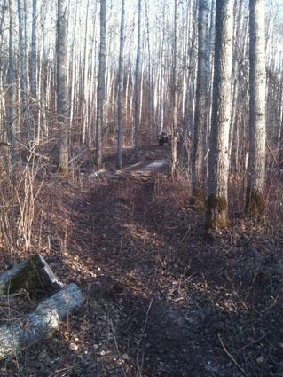 timberlost hunting
