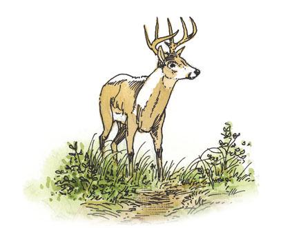 deer quiz
