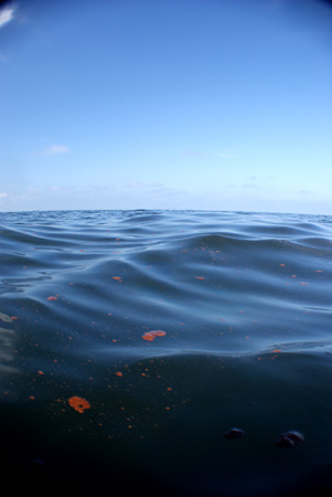 oil spill gulf of mexico
