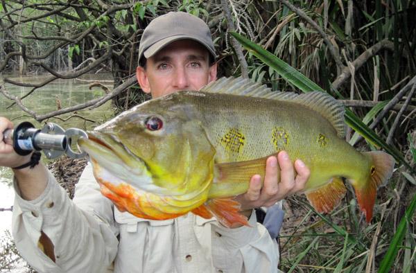 orinoco peacock bass