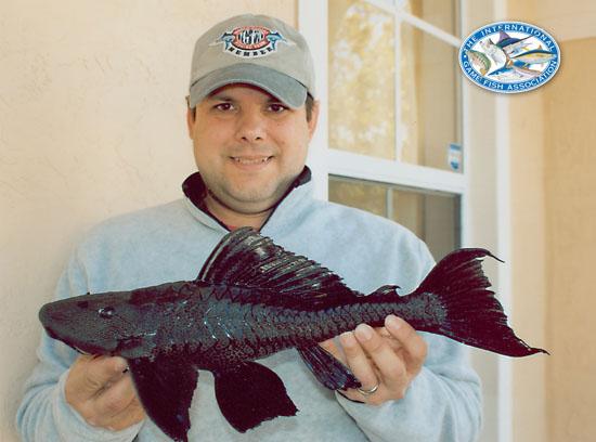 amazon sailfin catfish world record