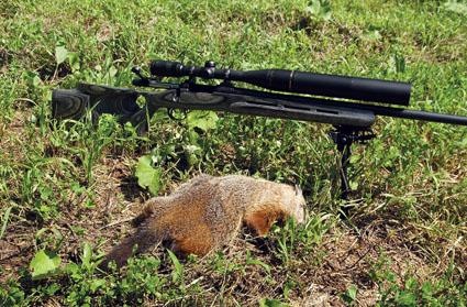 summer woodchuck hunting