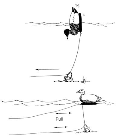 motion decoy rig