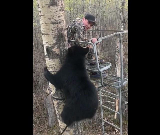 Fun Friday Video Alberta Black Bear Climbs Youth Hunters Ladder Stand