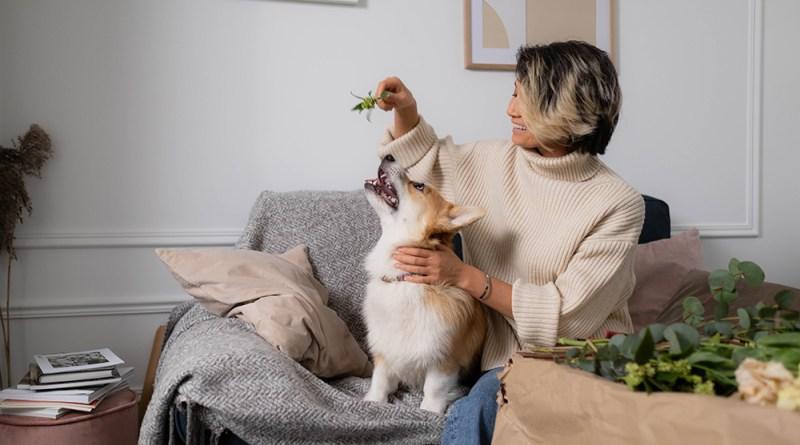 Denver grant keeps pets and people together