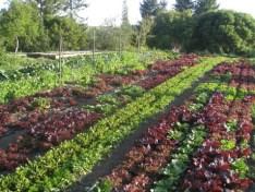 Charan Springs Farm Cambria, CA