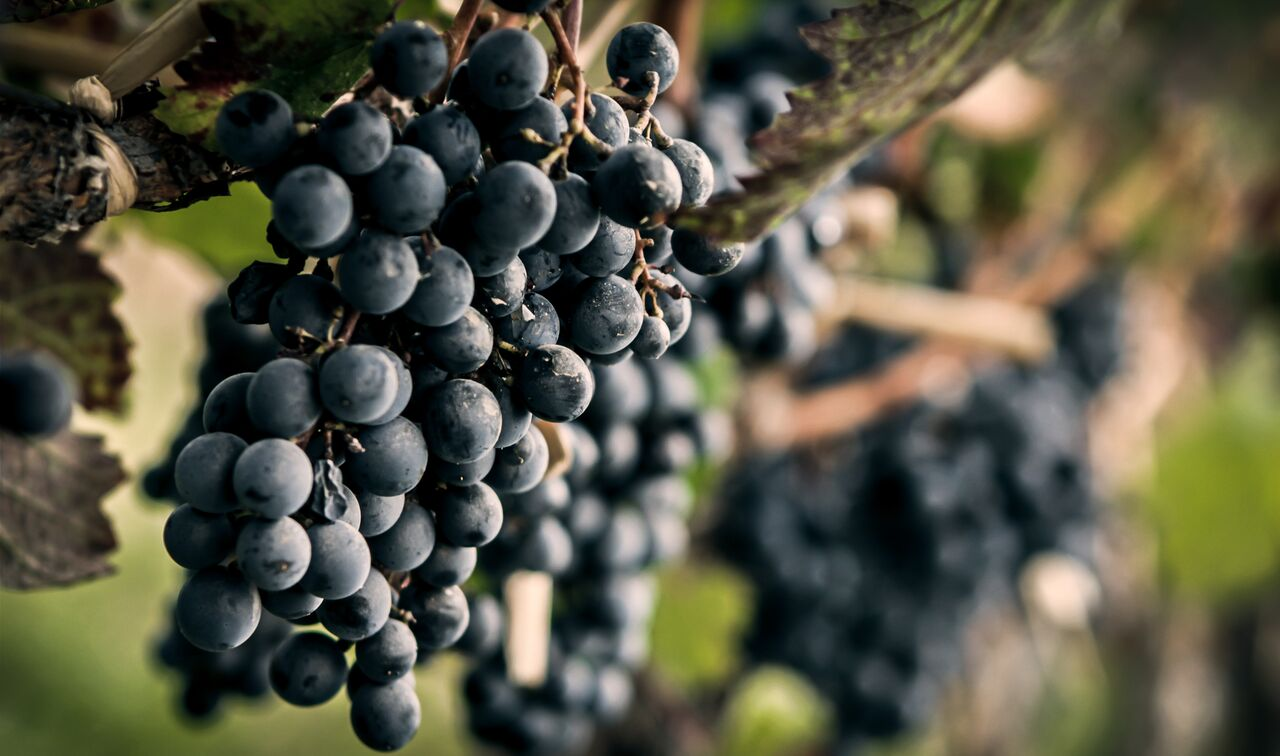 Celebrate Malbec with Affordable Finds from Argentina - Grape Experiences