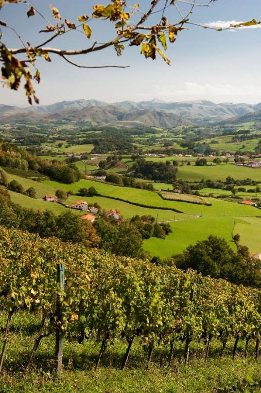 Image result for wine tourism in Wines of Southwest France