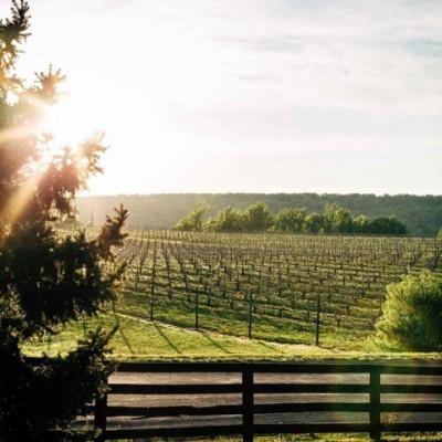 Cabernet Franc - Blenheim Winery