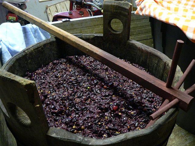 Brettanomyces su acini d'uva
