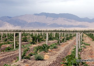 North by Northwest Wineries Xinjiang China