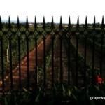 China vineyard