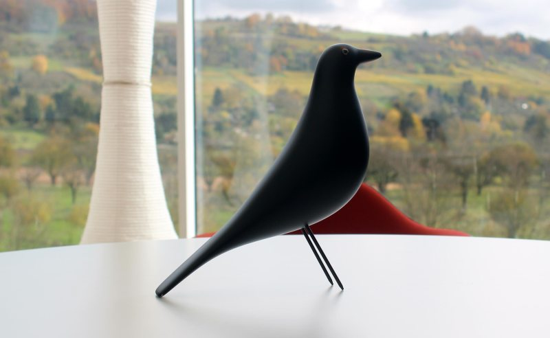 black-bird-design