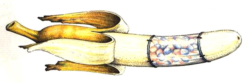 codex-banane
