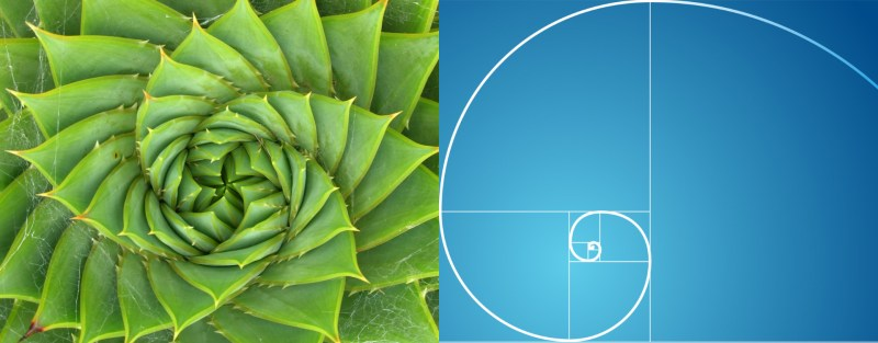 spirale-naturelle