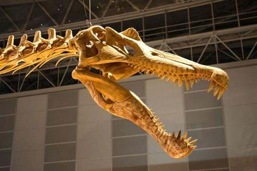 Jurassic-Park-3-Spinosaurus_skull