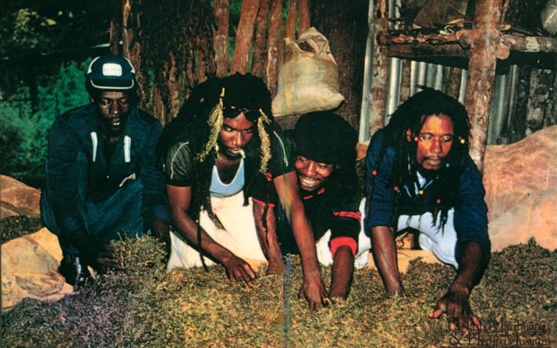 rastafarisme-cannabis