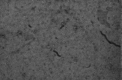 Flexible, easy-to-scale nanoribbons move graphene toward use in tech applications image