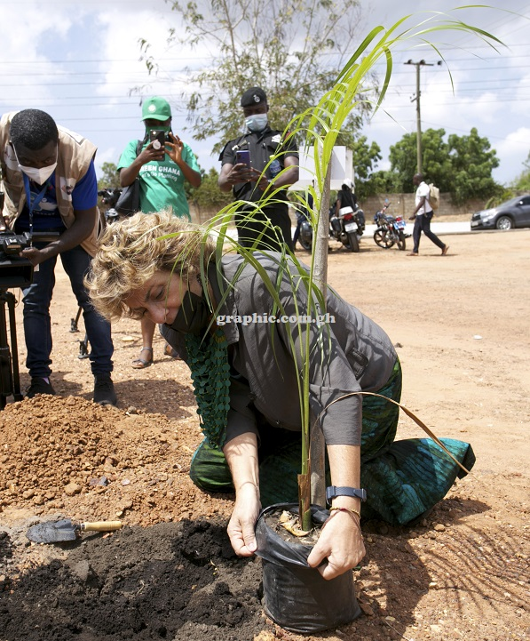 Our nurseries offer different species of hardwoods and. Green Ghana Project Seedlings Won T Go Waste Forestry Commission Assures Graphic Online