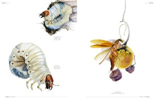 IdN Extra 11: Cercle Magazine – Insects Conversations & Images