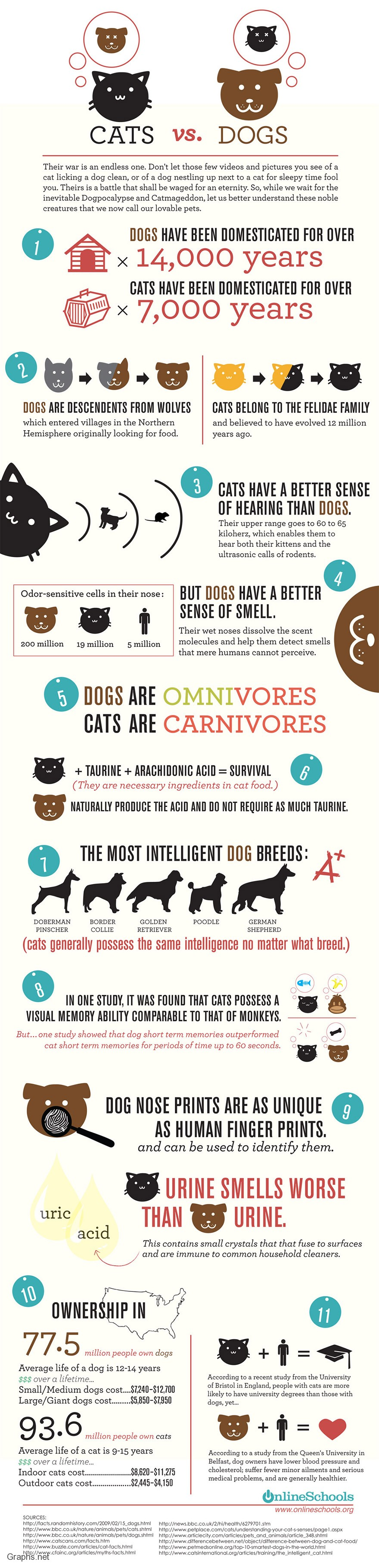 The Top 5 Reason on why you should Chose a Dog Over Cat