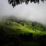 Yuanyang rice fields