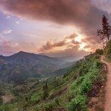 Thong Nguyen the path