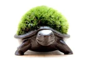 甲羅が苔!?亀をモチーフにした苔盆栽のかわいい雑貨。