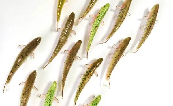 魚雑貨イメージ