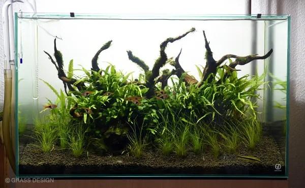 60cm水草レイアウト水槽