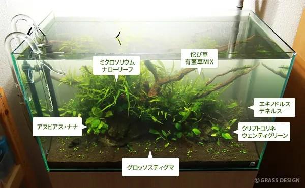 60cm水草水槽の流木レイアウト