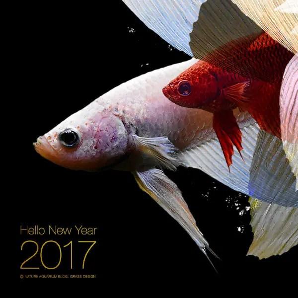 2017年もGRASS DESIGNをよろしくお願いします!