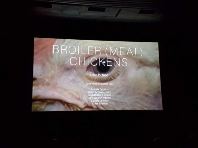 close up van hoofd van witte kip, met daarop de tekst in witte letters